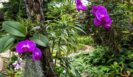 Plush Garden